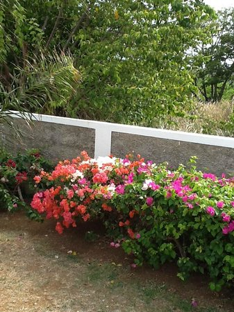 Silver Sands Vacation Villas : Wall and Side Yard