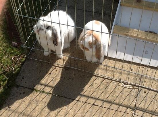 No. 2 Troon Road: The bunnies out back.