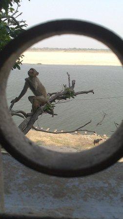 Eden Halt: Ganges view