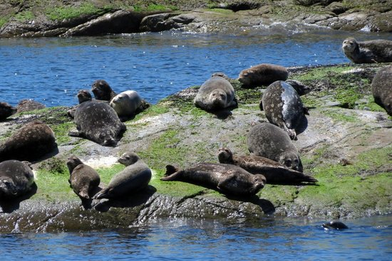 Pristine Charters: Seals in the area