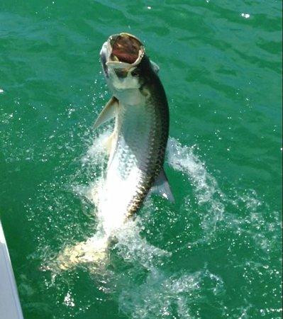 An Island Getaway at Palm Tree Villas : Tarpon fishing