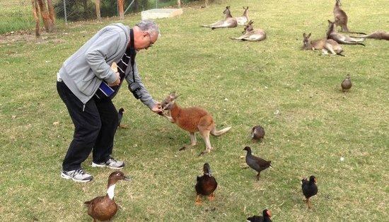 Chifley Apartments Newcastle: Feeding wallaby at Oakhill Farm