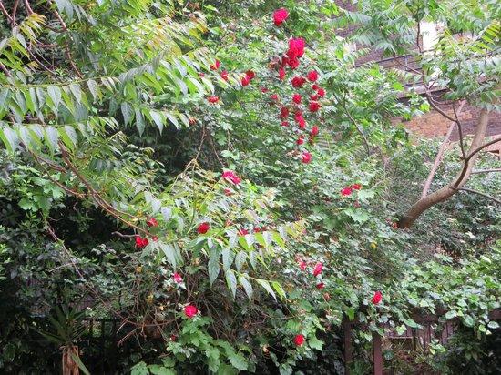 Grange Blooms Hotel: The garden