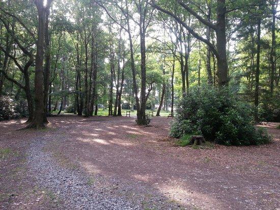 Alpine Grove Log Cabins: Woodland
