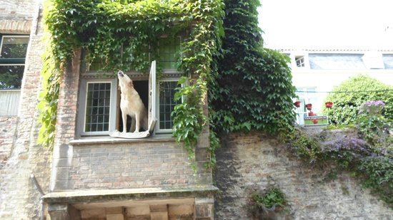 Academie Hotel: Famous dog barks at passing boats