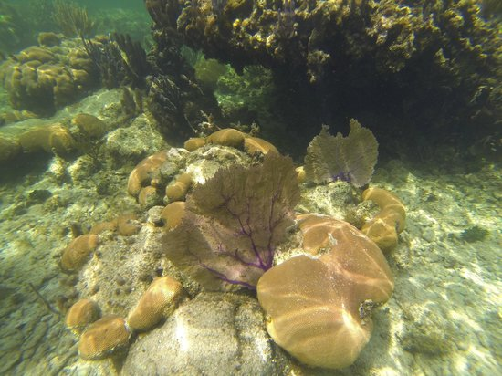 Hobbies Hideaway: snorkeling at Palmetto Bay