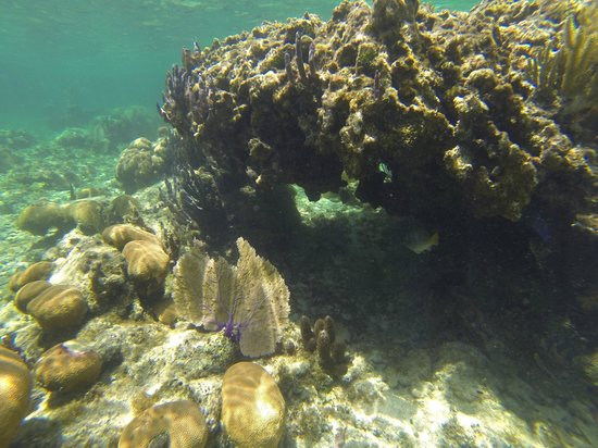 the reef near Hobbies Hideaway