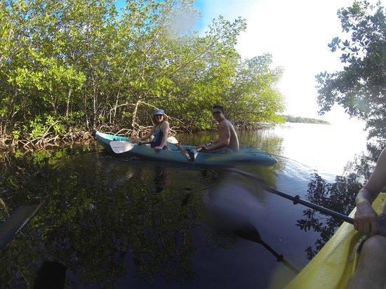 Hobbies Hideaway: the mangove stand near Hobbies