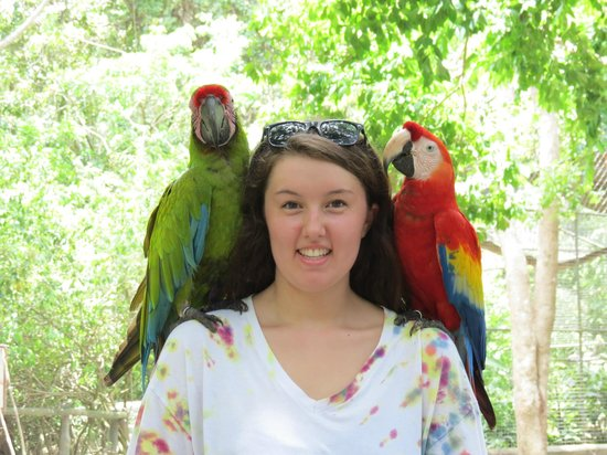 Hobbies Hideaway: macaws at Gumbalimba Park