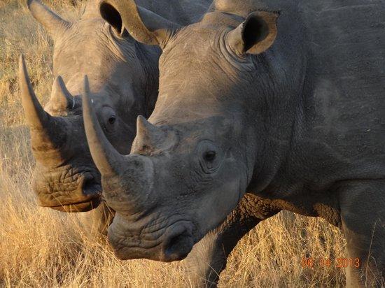 Lukimbi Safari Lodge: Rinos