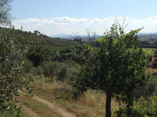 Villa Manuela: View from the kitchen window