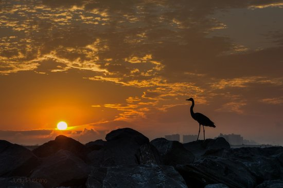 Phoenix VII: Sunrise At Orange Beach