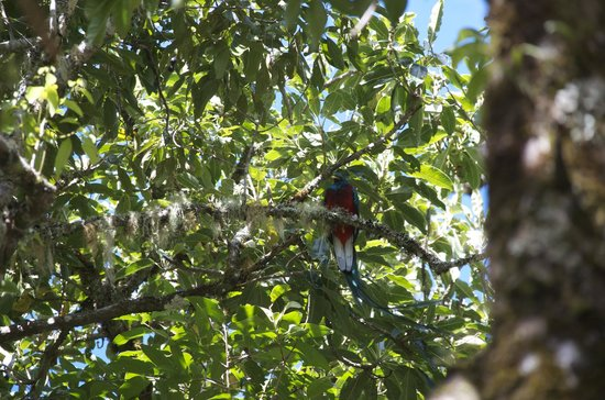 Quetzal Valley Cabins: Quetzal on our bird tour