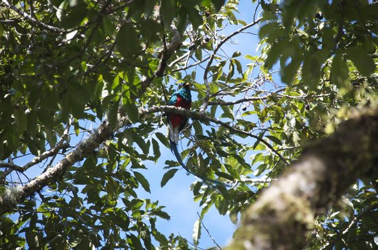 Quetzal Valley Cabins: Quetzal on our tour
