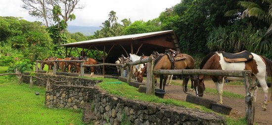 Maui Stables : Ready and waiting