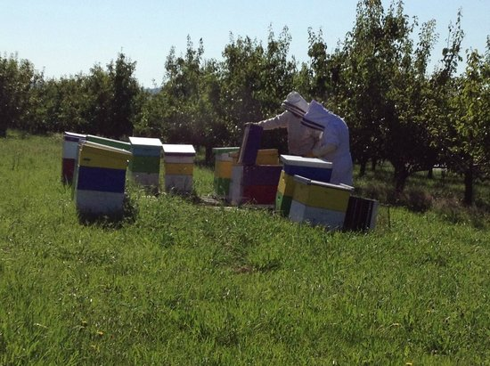 Sakura Ridge - The Farm and Lodge: Working with the bee hives with Farmer John