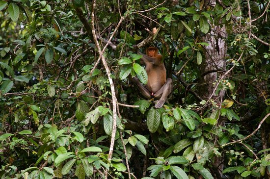 Borneo Birds - Picture of Kinabatangan River, Sabah ...