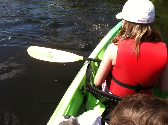 Karen's Kayaks : Meeting a manatee
