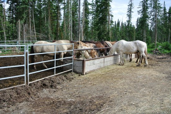 Timberline Tours Ltd. - Private Day Tours: Just a few of Timberline's horses