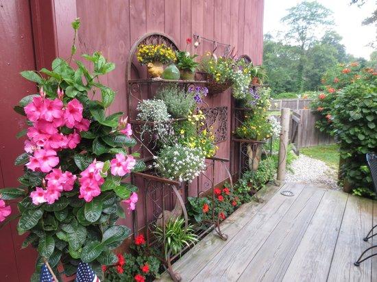 Sharpe Hill Vineyard : Outdoor greenery