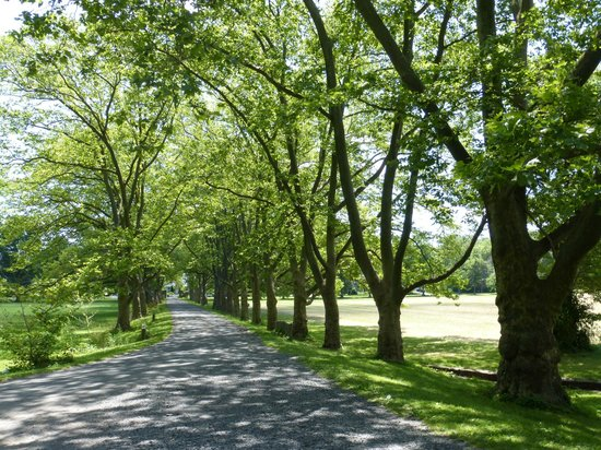 Road leading to Fonthill Castle