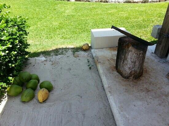 Viceroy Riviera Maya: make sure you order coconut milk @ Coral Grill. when your done, they cut it up and serve the coc