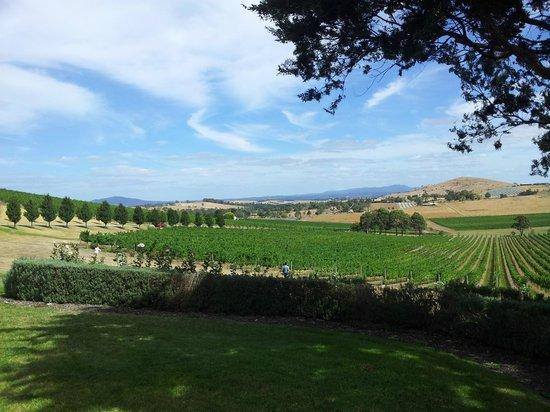 Chillout Travel Winery Tours: De Brotoli's