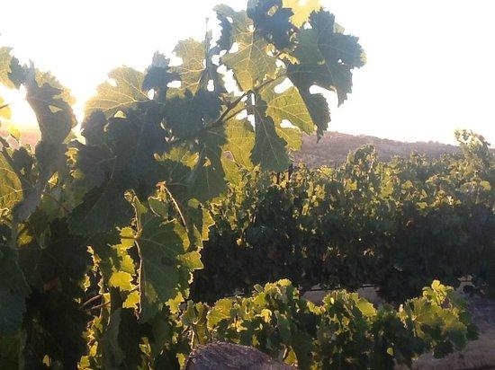 إقامة وإفطار بفندق كاريدج فاينياردز: Hiking in the vineyards