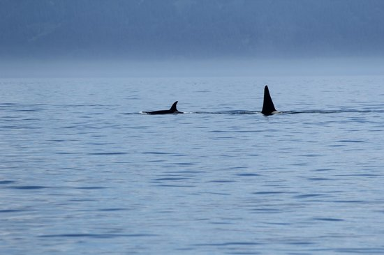 Rainbow Tours: Mother and baby Orca's