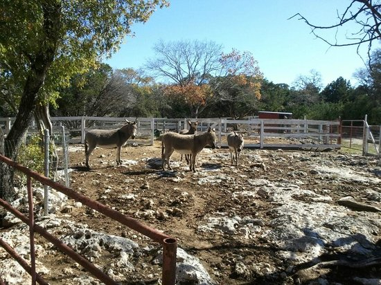 Serenity Farmhouse Inn: The Rescue Donkey corral