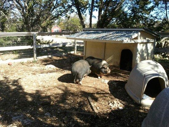 Serenity Farmhouse Inn: The Big Pig Pen for the Big Pigs