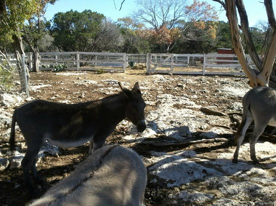 Serenity Farmhouse Inn: More Donkeys