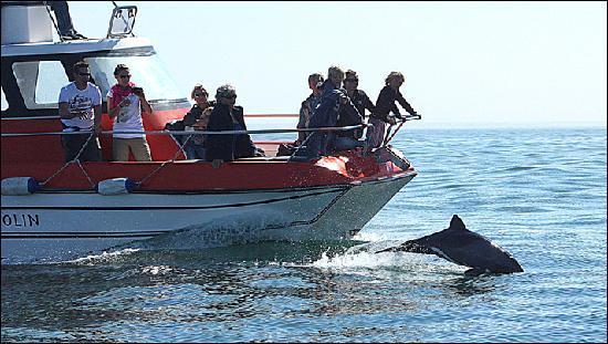 Mola Mola Safaris: Olin & dolphin