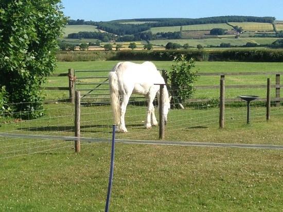 Rains Farm Holidays: Lorraine's horse