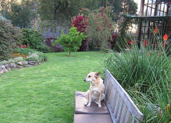 The Green House Peru: Cute dog