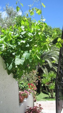 Ioannis Apartments: Grape vines and palms in the gardens