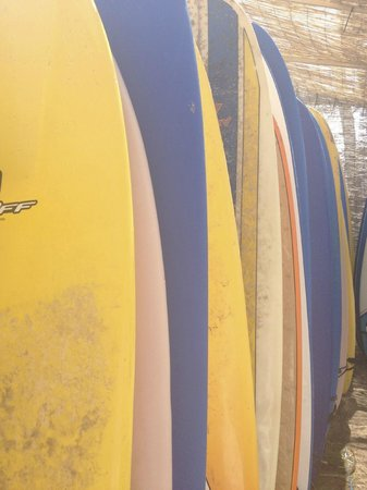 Feral Surf Tours : Surfboards