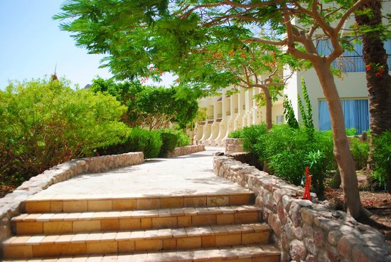 Dessole Holiday Taba Resort: территория