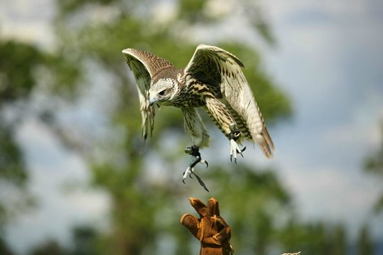 The Falconry School
