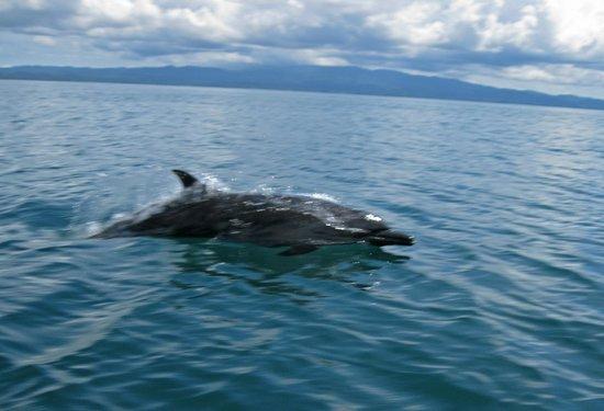 Aventuras Tropicales Golfo Dulce: delfines