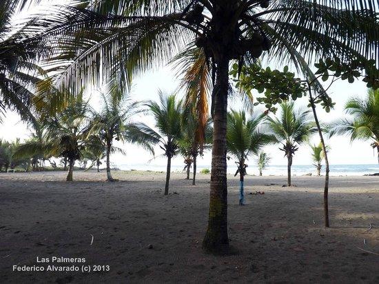 Hotel Playa Westfalia: Vista hacia el mar