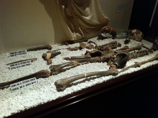 Antakya Archaeological Museum: Ancient remains