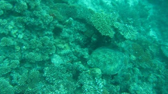 LUX* South Ari Atoll: diving