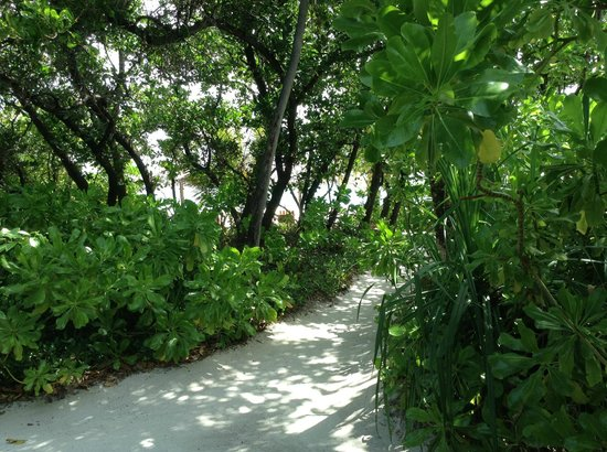 Coco Palm Dhuni Kolhu: pathway from villa