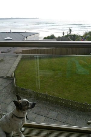 Watergate Bay Hotel: Our dog enjoying the view from our room