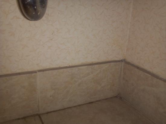 Comfort Suites Northlake : Add a caption