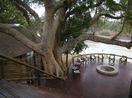Naledi Game Lodges: Large trees around decks at Enkoveni