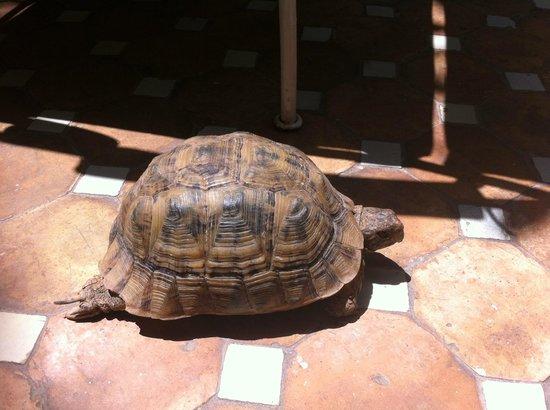Riad Rafaele: Tortoise