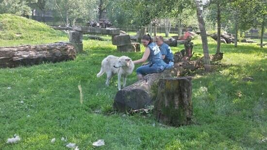 Phillips Park Zoo: tending to the wolves