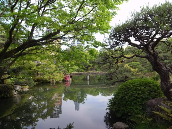 Sorakuen Garden: pond of the japanese garden 日本庭園の池